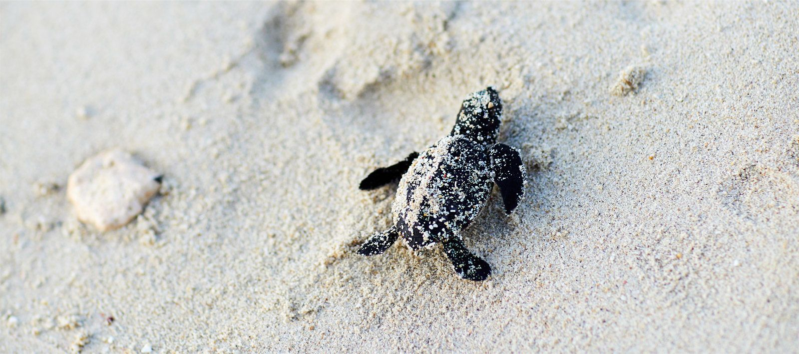 Saving the Sea Turtles